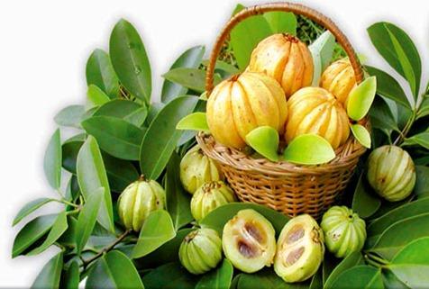 Chiết xuất Garcinia Cambogia ngăn quá trình hình hình thành mỡ