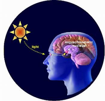 Não chỉ tự sản sinh Melatonin khi không có ánh sáng