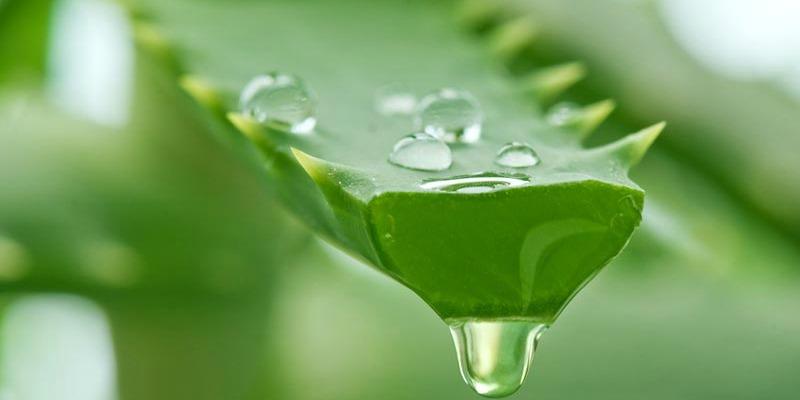 Kem dưỡng ẩm Aloe vera 2