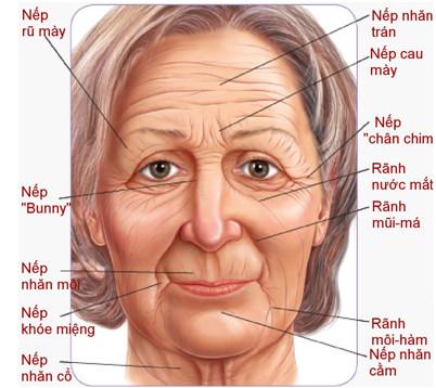 Neutrogena Ageless Anti-Wrinkle & Firming Cream Kem Chống Vết Nhăn Ban Đêm 0