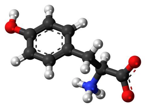 Cấu trúc hóa học của L-Tyrosine