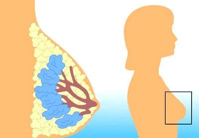 Nature's way dim-plus – viên uống giải độc gan, ngăn ngừa ung thư và bệnh tim mạch 120 viên