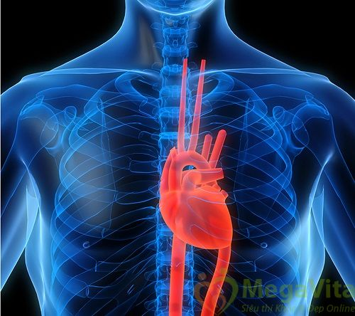 Người mắc bệnh cao huyết áp nên hạn chế ăn mỡ và da