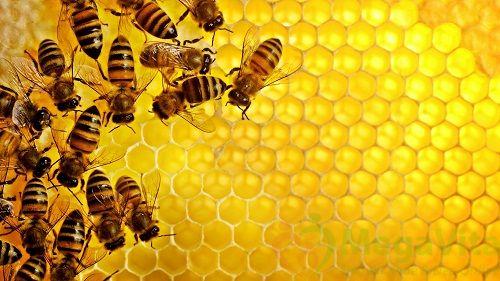 Bệnh tiểu đường có uống được mật ong không