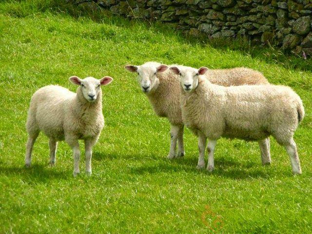 Những tác dụng của kem dưỡng da nhau thai cừu