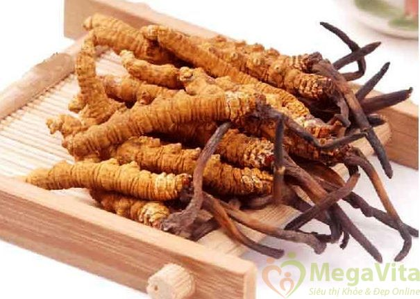 Đông trùng hạ thảo tvt sấy thăng hoa dạng nguyên nhộng và nấm lọ thủy tinh 30g